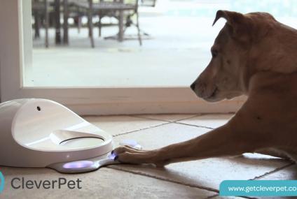 Consola para perros: CleverPet