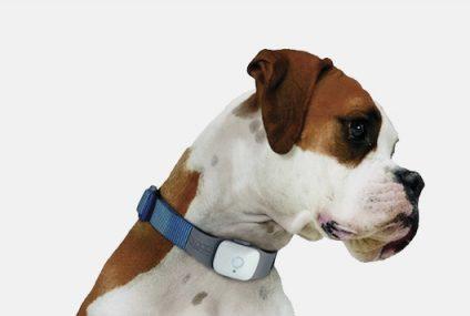 Correas para perros con GPS